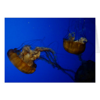 Pacific Sea Nettle Jellyfish Card