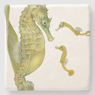 Pacific Seahorse Family Stone Coaster