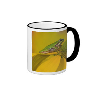Pacific tree frog on flowers in our garden, 2 coffee mugs