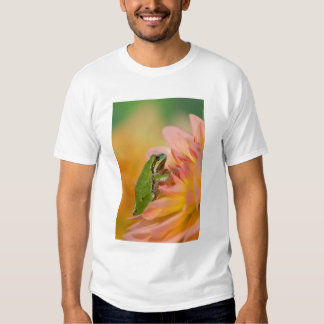 Pacific tree frog on flowers in our garden, 2 t shirt