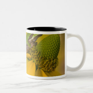 Pacific tree frog on flowers in our garden, 2 Two-Tone mug