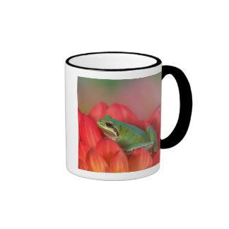 Pacific tree frog on flowers in our garden, 3 mugs
