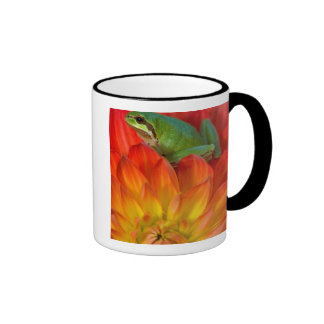 Pacific tree frog on flowers in our garden, coffee mug