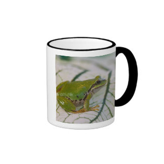 Pacific tree frog on flowers in our garden, ringer mug