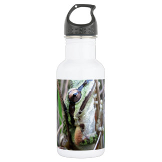 Pacific Treefrog or Chorus Frog 532 Ml Water Bottle