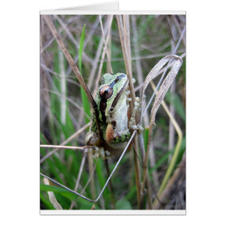 Pacific Treefrog or Chorus Frog Greeting Card