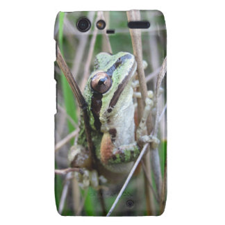 Pacific Treefrog or Chorus Frog Droid RAZR Cover