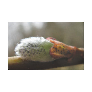 Pacific Willow Leaf Bud Canvas Print