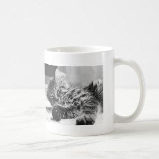 Pack kitten coffee mug