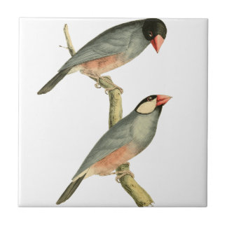 Paddy bird, Rice bird, or Java Sparrow Bird Illust Ceramic Tile