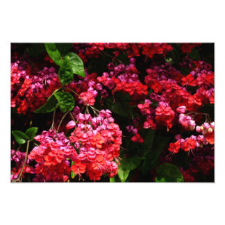 Pagoda Flowers Colorful Red and Pink Floral Photo Print