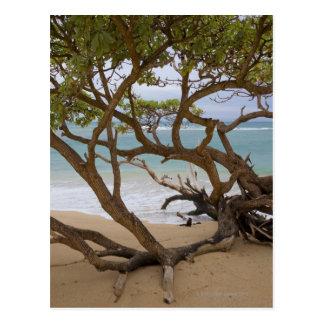 Paia Bay Beach, Maui, Hawaii, USA 2 Postcard