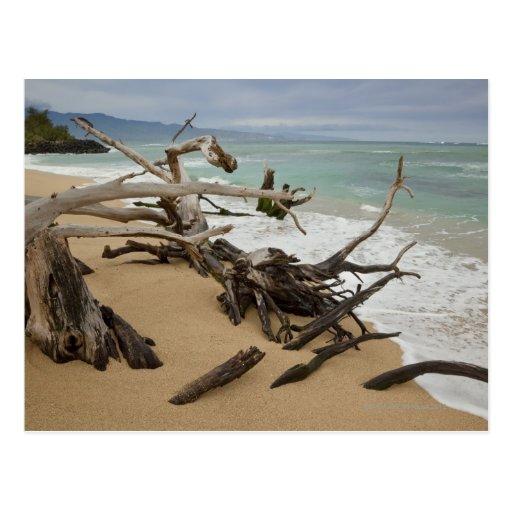 Paia Bay Beach, Maui, Hawaii, USA Postcards