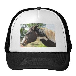 Paint Horse Cap