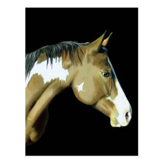 Paint Horse, Lady Postcard
