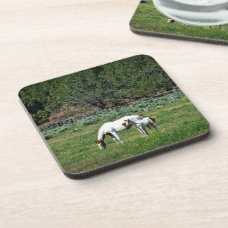 Paint Horse Mare and Foal Coaster