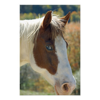 Paint Horse Photo Art