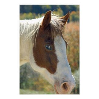 Paint Horse Photo Art