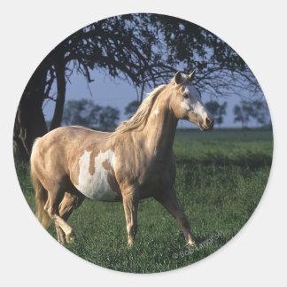Paint Horse Standing 2 Round Sticker
