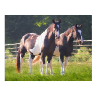 Paint Horses In Pasture Postcard