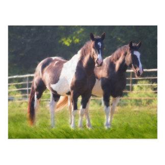 Paint Horses In Pasture Postcard