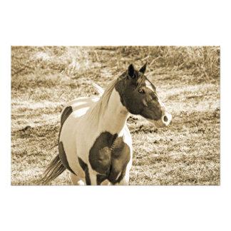 Paint Pony Photo