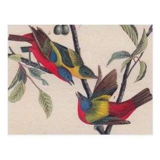 Painted Bunting Audubon Prints Postcard