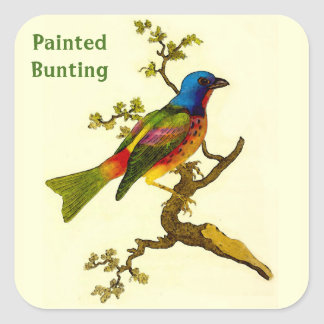 Painted Bunting Bird Stickers