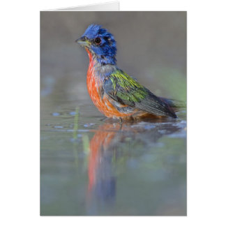 Painted Bunting Card