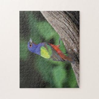 Painted Bunting Jigsaw Puzzle