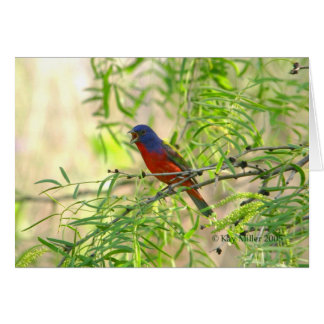 Painted Bunting special-4 Card