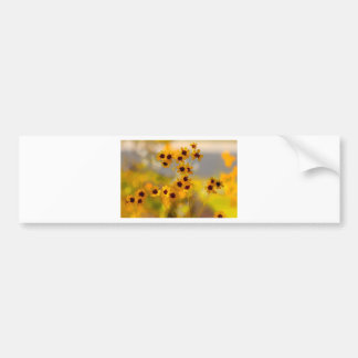 Painted Coreopsis tinctoria Wildflowers Bumper Sticker