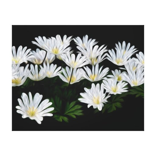 Painted Daisies Stretched Canvas Prints