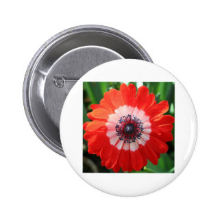 Painted Daisy bright red Pins