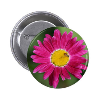 Painted Daisy Cards and more Buttons