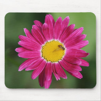 Painted Daisy Cards and more Mouse Pads