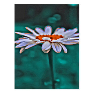 Painted Daisy Design Postcard