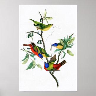 Painted Finch John James Audubon Birds of America Poster