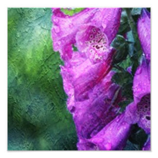 Painted Foxglove Photo