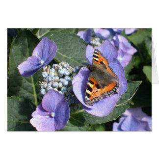 Painted Lady Butterfly 1 Card