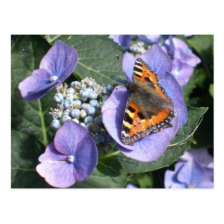 Painted Lady Butterfly 1 Postcard