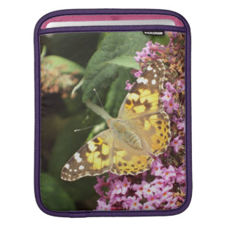 Painted Lady Butterfly, Feminine Sleeve For iPads