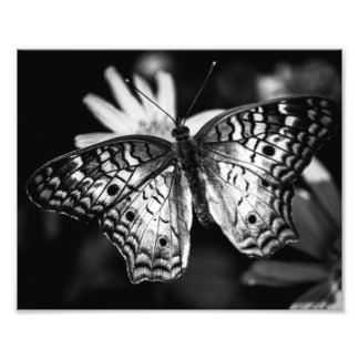Painted Lady Butterfly – Photo Print