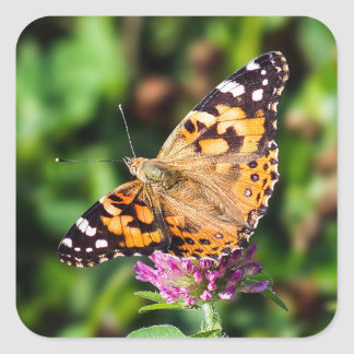 Painted Lady Butterfly Sticker