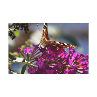 Painted lady (Vanessa cardui) Canvas Print