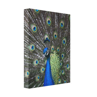 Painted Peacock Wrapped Canvas Print