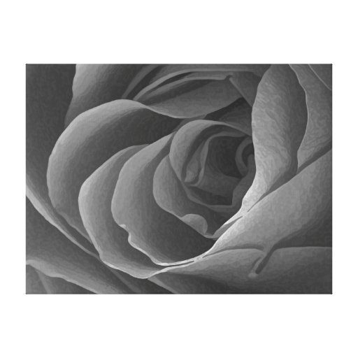 Painted Rose in Black & White on Canvas Stretched Canvas Print