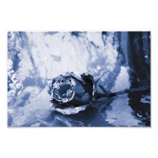 Painted Rose Photo Art