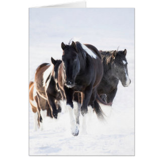 """Painted Snow Day II"" - Wild Horse Greeting Card"