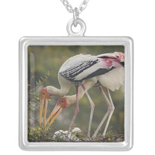 Painted Storks & youn one at nest,Keoladeo Pendant